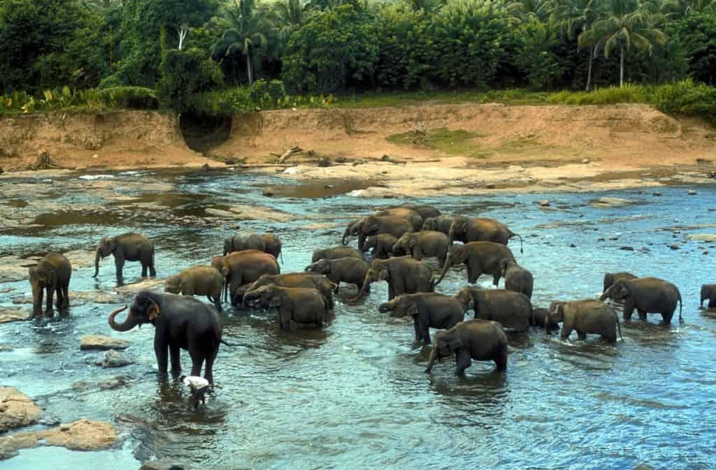 Egzotikus utazás, körutazás, privát utak: Sri Lanka - Pinnawela elefánt árvaház