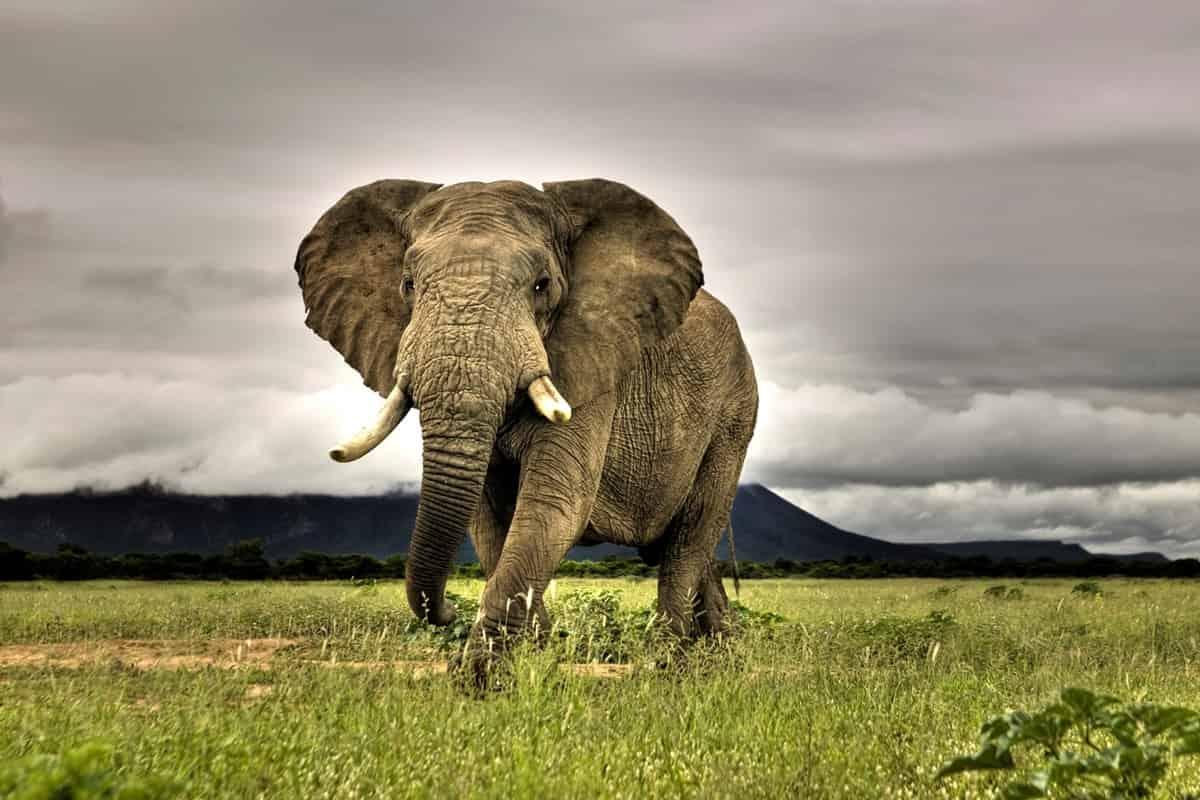 Szafari | Körutazás | Fly & Drive | Privát utazás